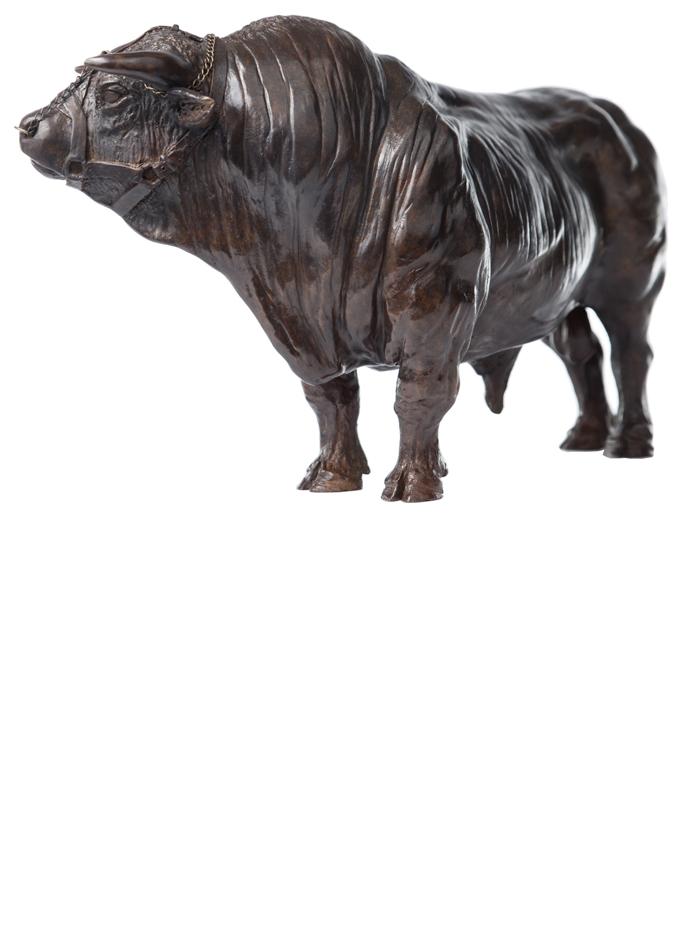 Damien Colcombet bronze Coquet taureau charolais
