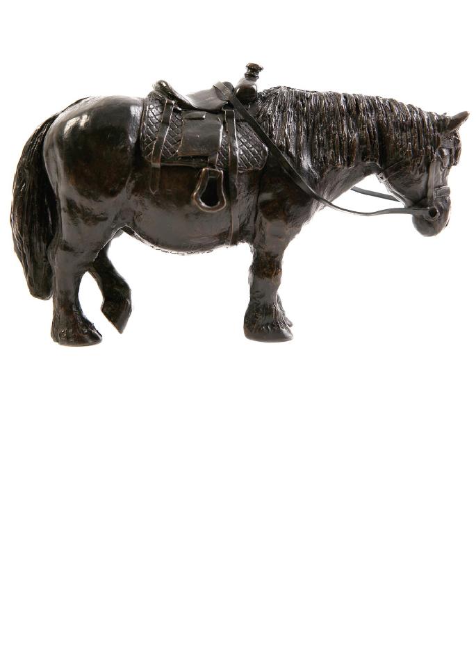 poney-damien-colcombet