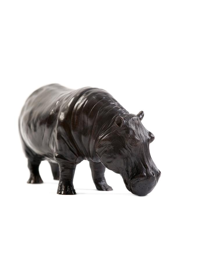 Damien Colcombet, Grand hippopotame mâle