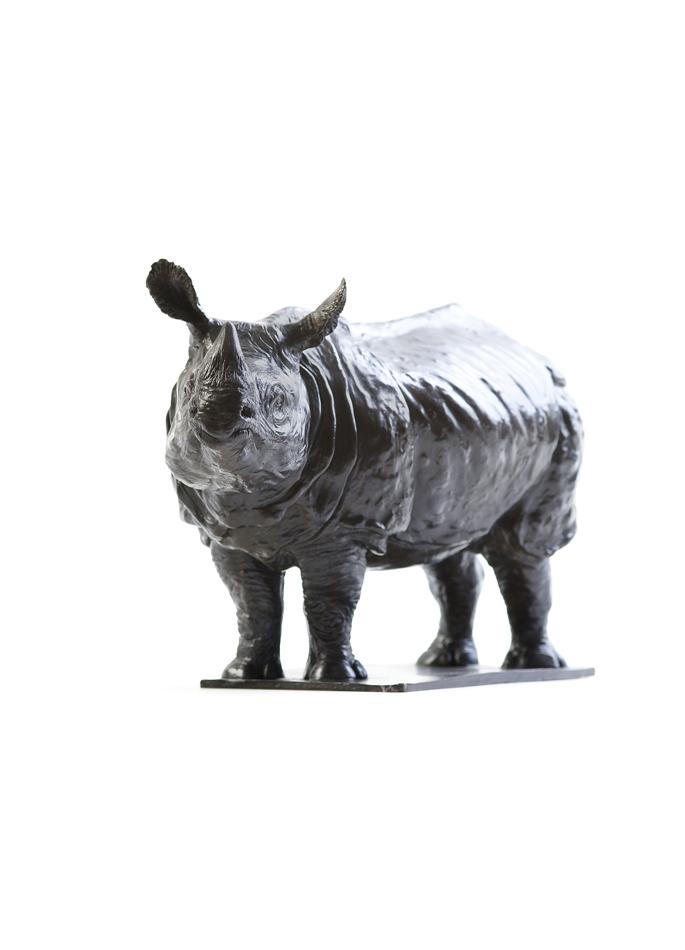 Damien Colcombet, Rhinoceros indien