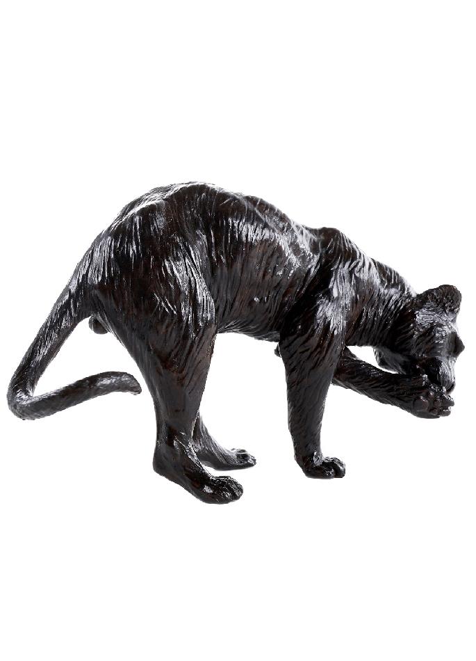 tigre-patte-damien-colcombet