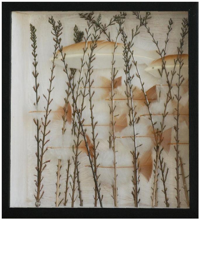 anne-limbour-savane-transparente