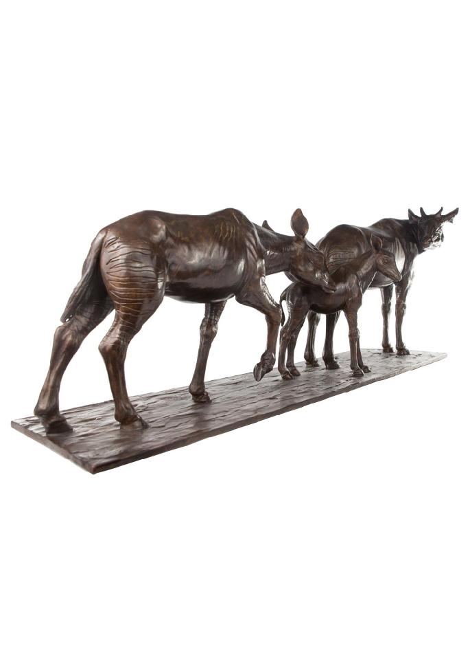 Les okapis