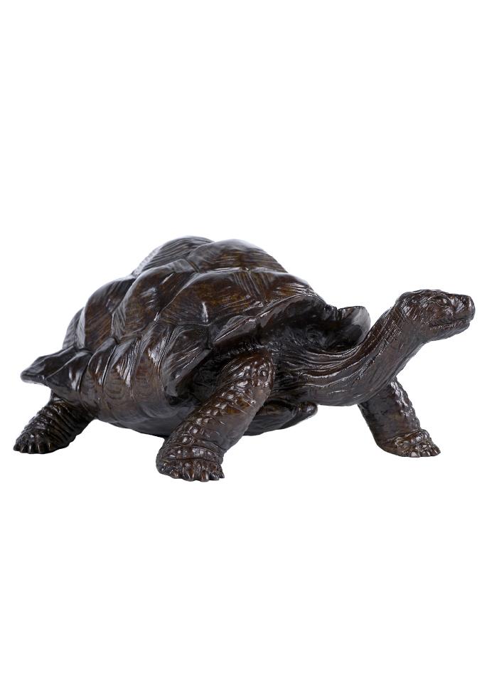 tortue-geante-daldabra