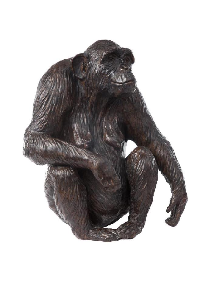 xanthippe-chimpanzée-damien-colcombet