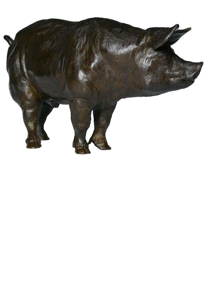 verrat-cochon-damien-colcombet