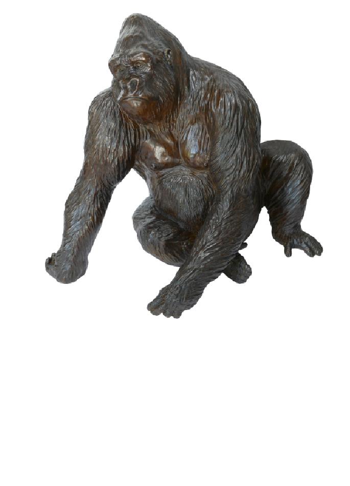 le-gorille-pythagore-damien-colcombet