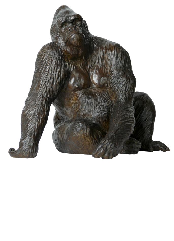 le-gorille-pythagore-damien-colcombet-5
