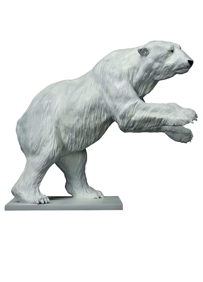 Damien Colcombet-Great Polar Bear