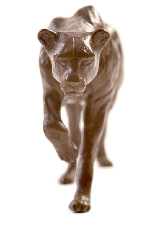 guepard-damien-colcombet