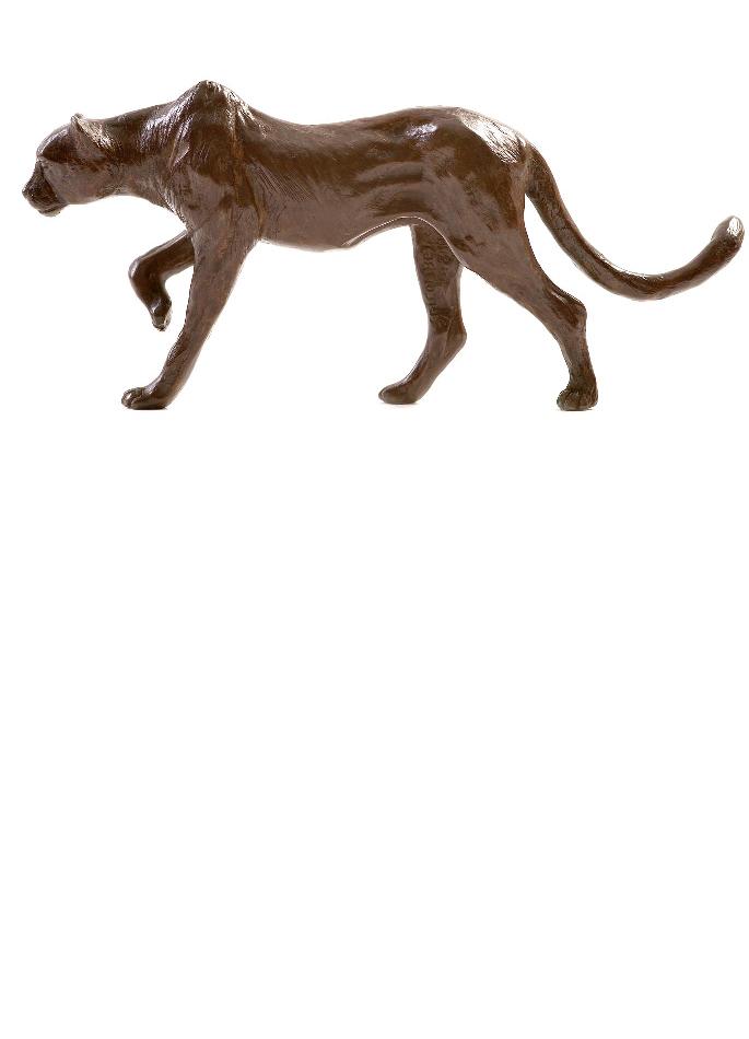 guepard-damien-colcombet-3