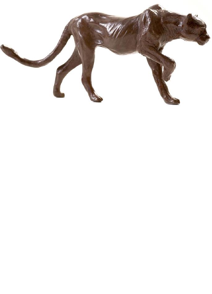 guepard-damien-colcombet-4