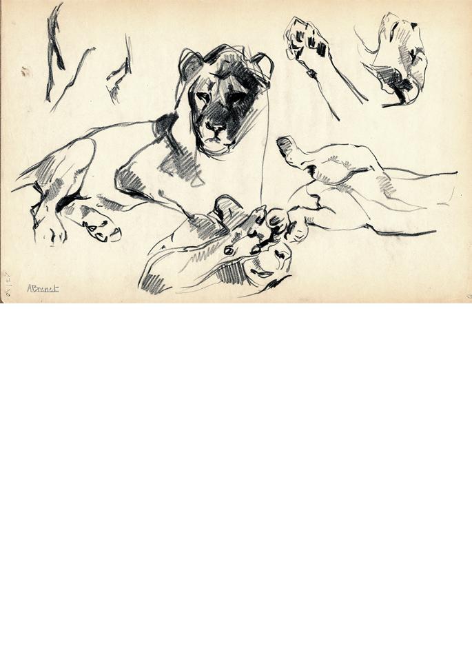 Albert Brenet dessin Animalia La lionne