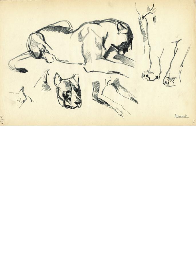 Albert Brenet dessin Animalia Le lion
