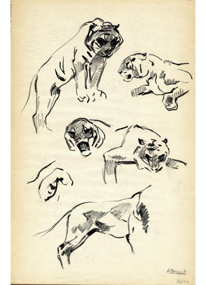 Albert Brenet dessin Les tigres. Étude
