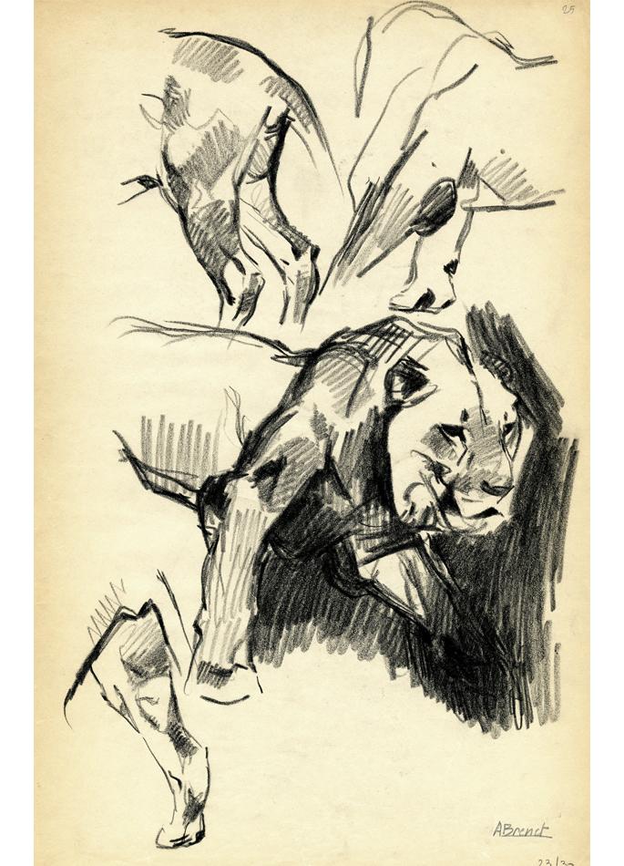 Albert Brenet dessin Lion marchant. Étude