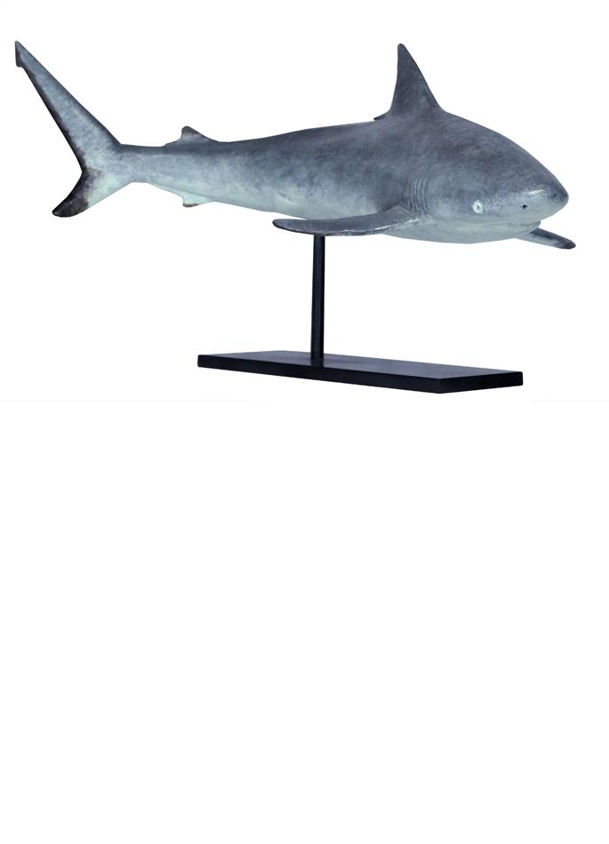 Damien Colcombet bronze Requin gris des récifs
